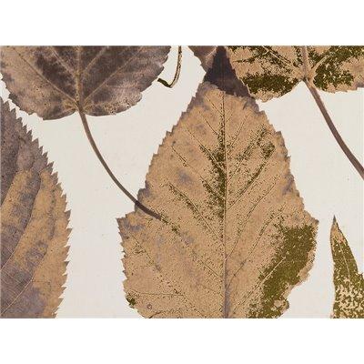 Cuadro hojas marrón