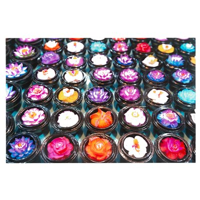 Flowers colors painting