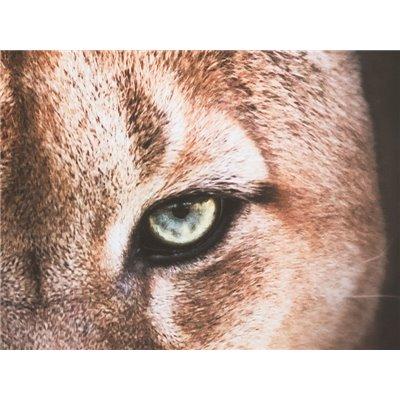 Cadro óleo leoa