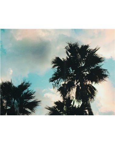 Cadro óleo árbores