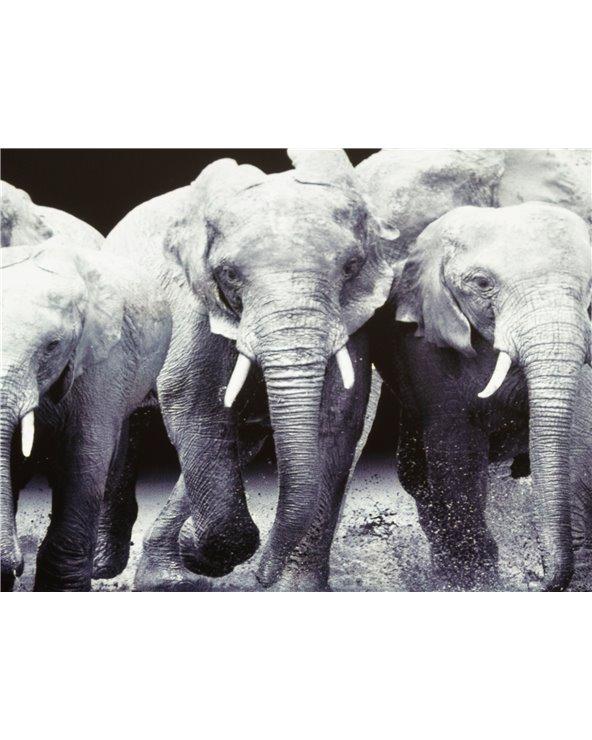 Caixa xoieiro elefante