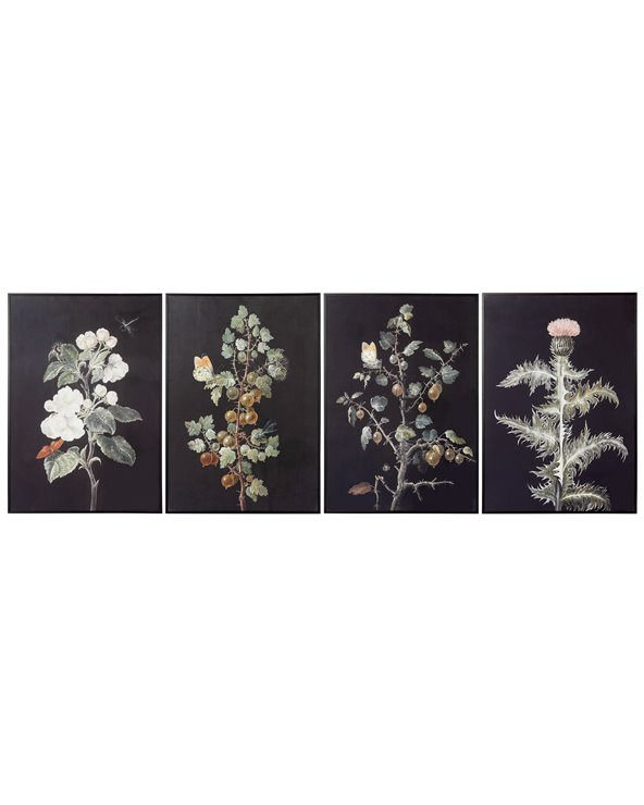 Set 4 plants paintings