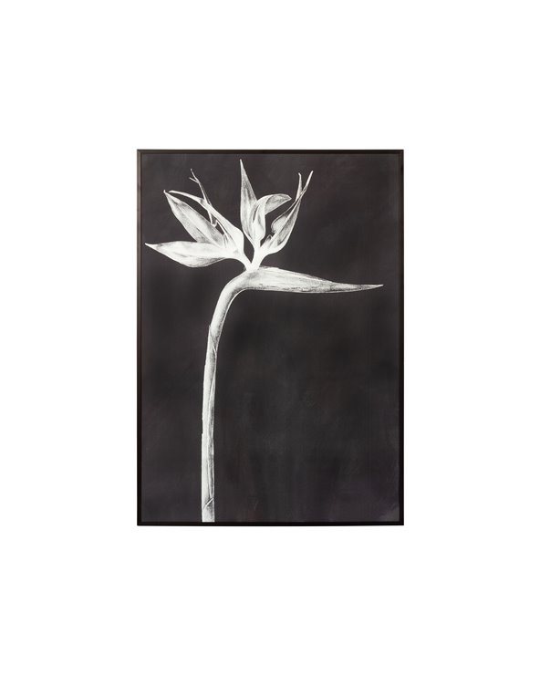Zwarte paradijsvogel schilderij